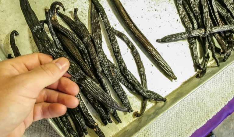HOW TO GROW VANILLA