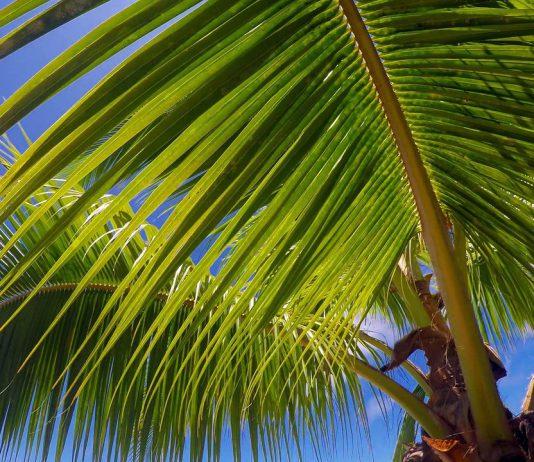 Tahiti-Island-full-HD