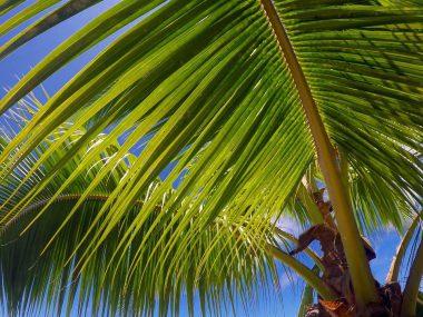 Tahiti-Island-full-HD-attachment