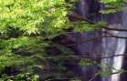 Amazing-Waterfall-in-Japan-4K-Ultra-HD-attachment