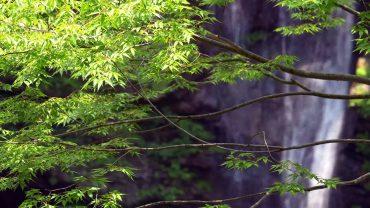 Amazing-Waterfall-in-Japan-4K-Ultra-HD-attachment