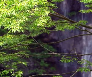 Amazing-Waterfall-in-Japan-4K-Ultra-HD